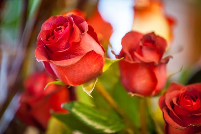 Rose Valentinstag Wuppertal Fotograf